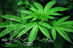 Image of Marijuana leaf with CBD molecule superimposed over it.
